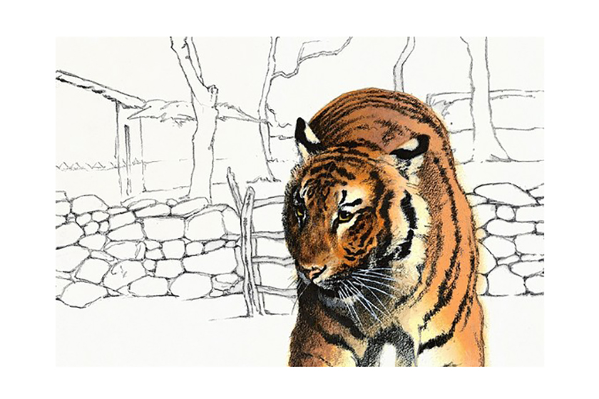 Can-We-Save-the-Tiger